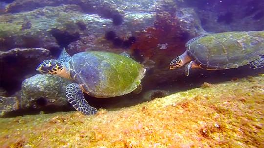 anilhamento-tartarugas